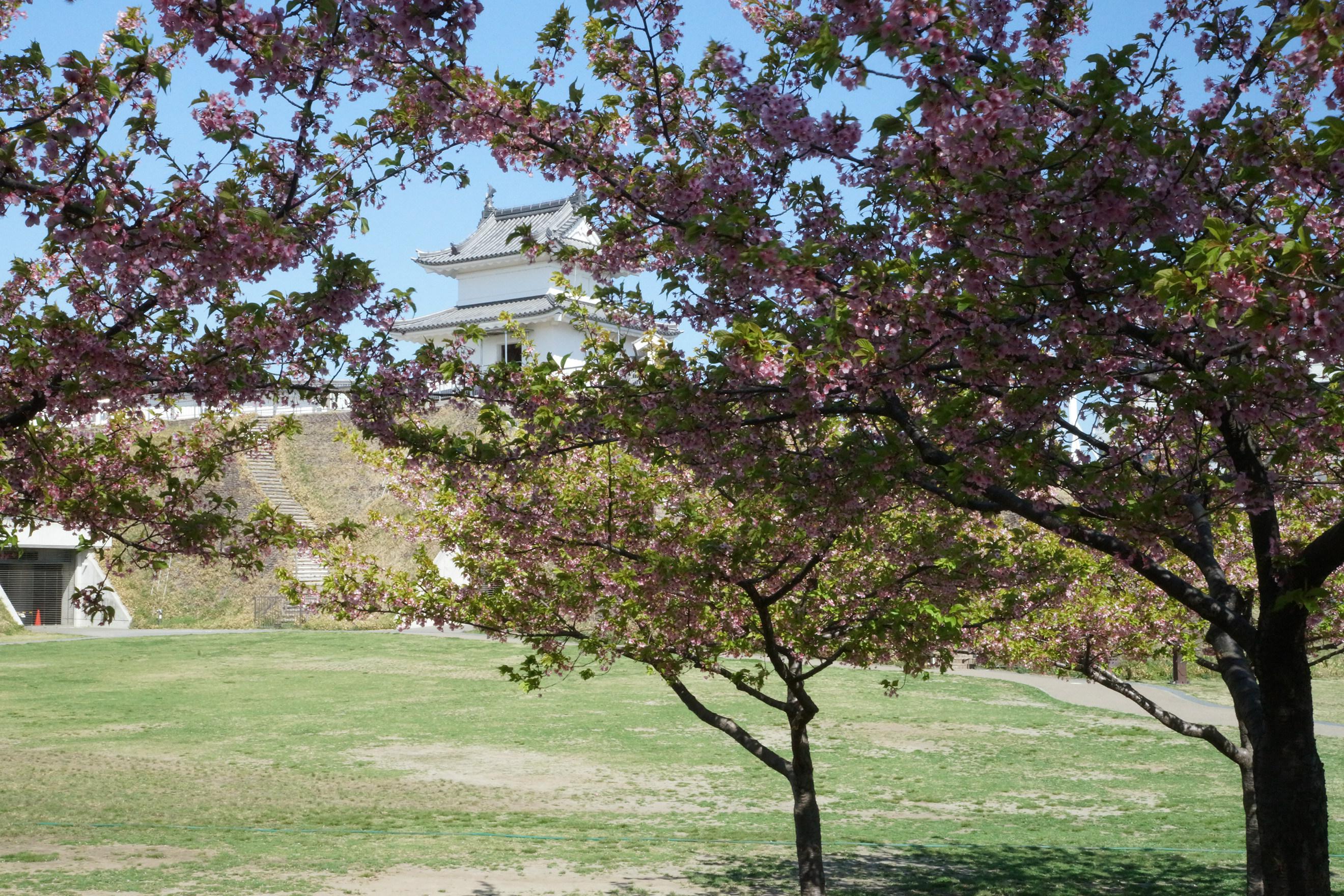 宇都宮城址公園2018年3月30日更新