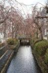 かまがわ川床桜まつり