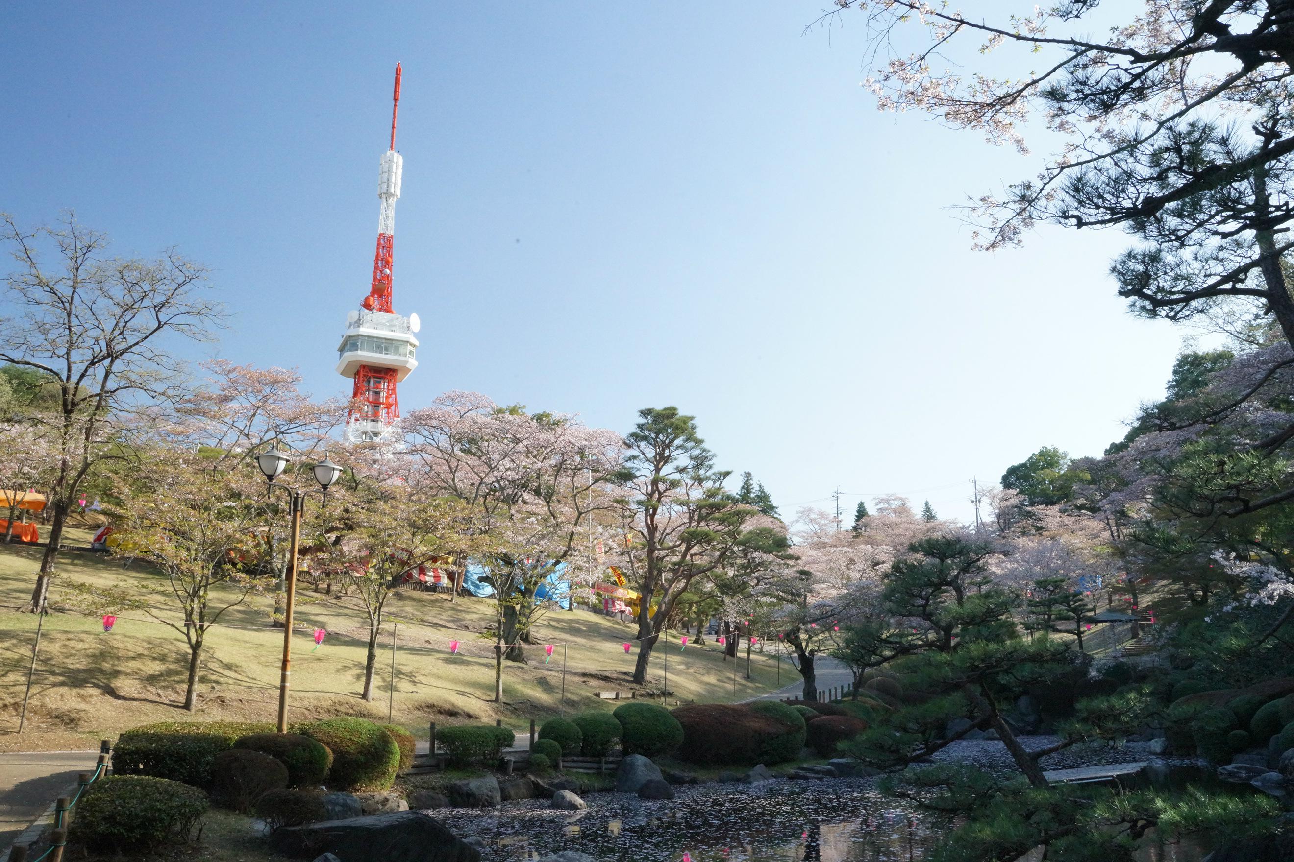 八幡山公園2018年4月5日更新