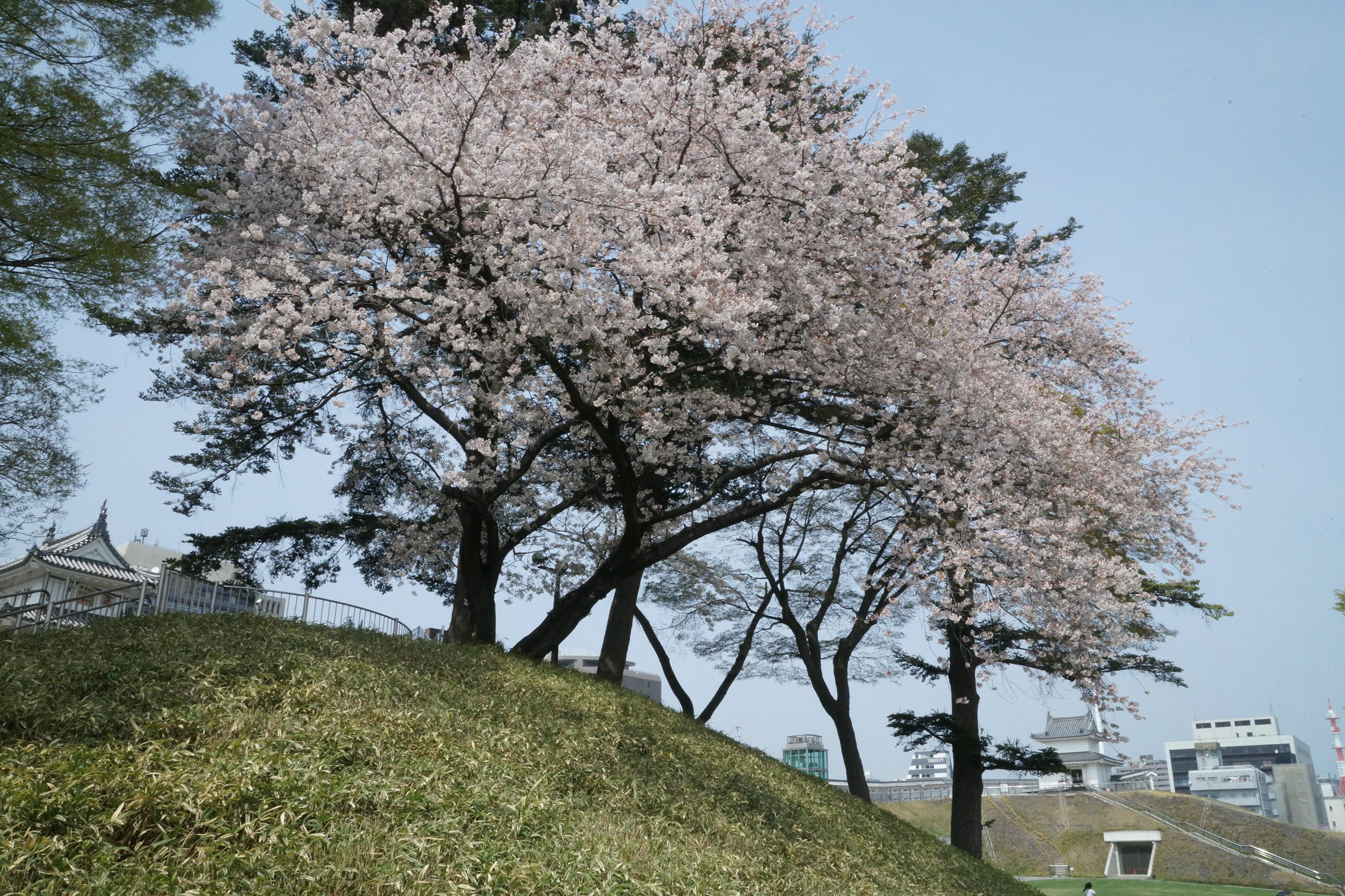 宇都宮城址公園2018年4月3日更新