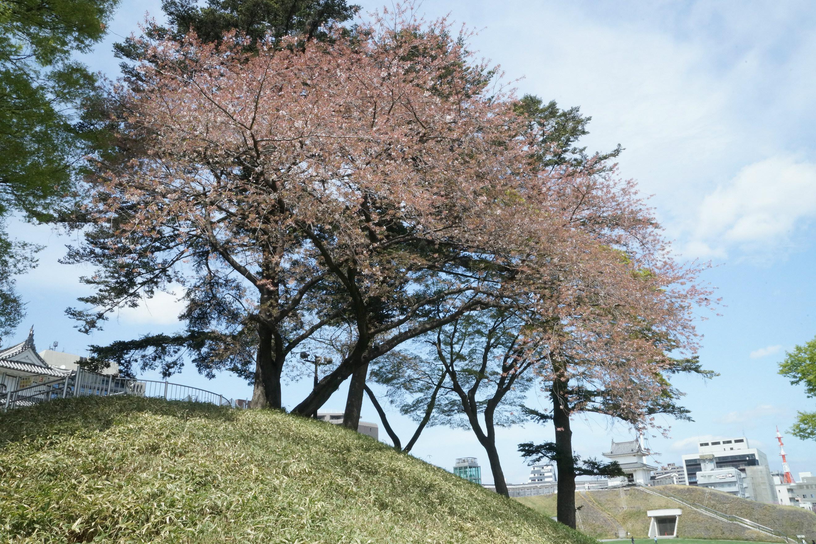 宇都宮城址公園2018年4月5日更新