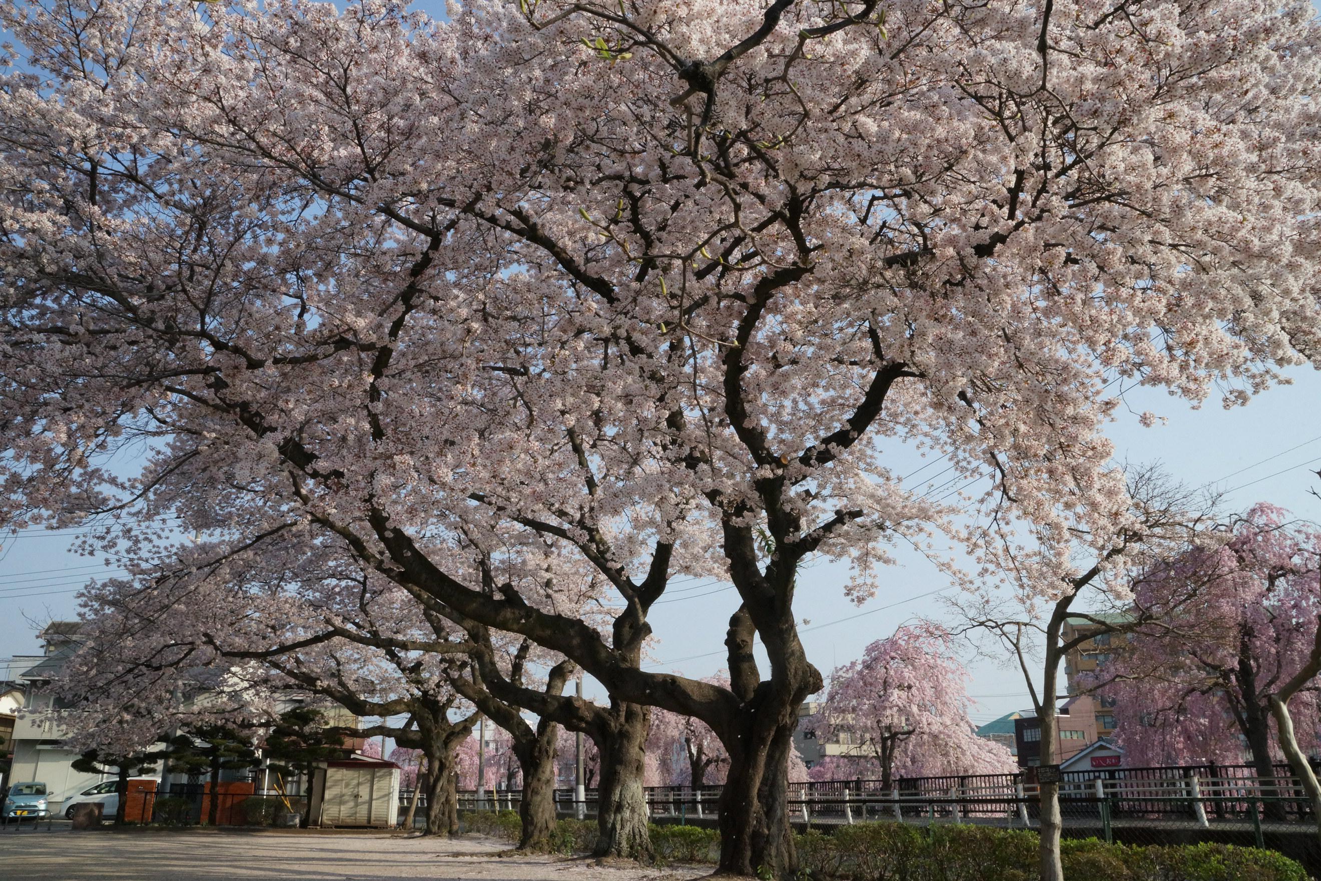 田川2018年4月4日更新