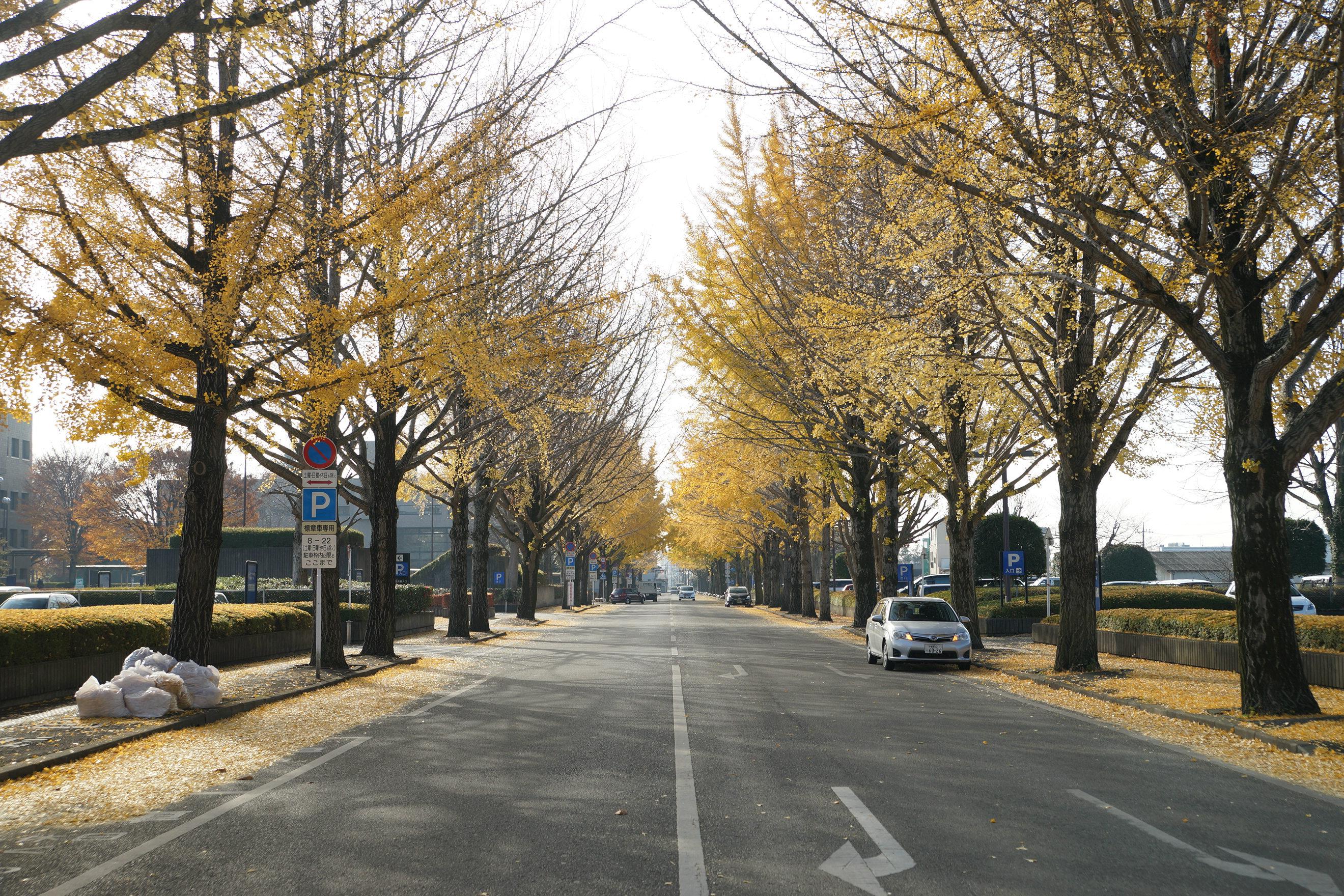 2018年12月4日(火)更新