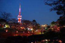 八幡山公園ぼんぼり点灯