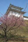 宇都宮城桜祭り