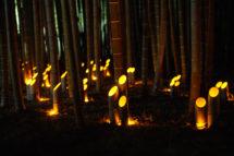 【2019/4/1~6/30】若山農場の竹灯り