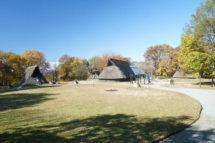 うつのみや遺跡の広場のニッコウキスゲ