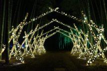 若竹の杜 若山農場 Bamboo Winter Lights