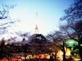 06八幡山公園の夜桜