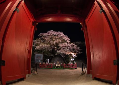 「赤門の夜桜」 宇都宮市 手塚 靖さん