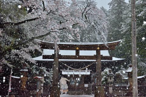 「春雪の蒲生神社」 宇都宮市 青野 泰廣さん