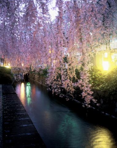 24釜川の桜