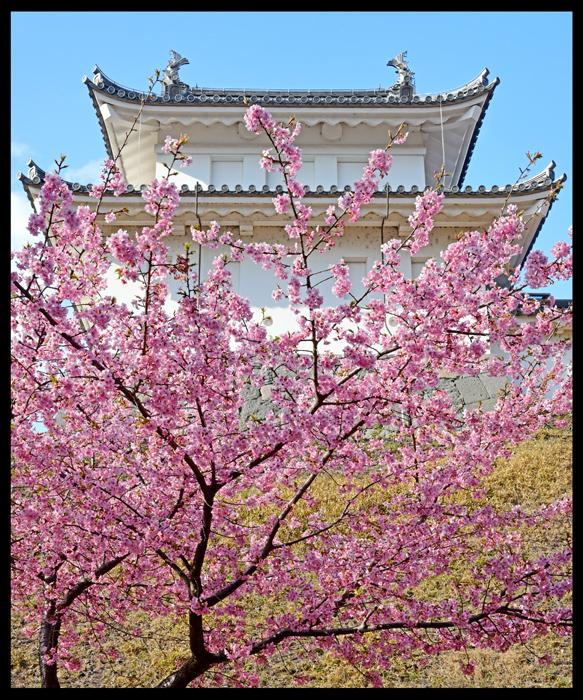 「富士見櫓の春」 小山市 舟橋哲次さん