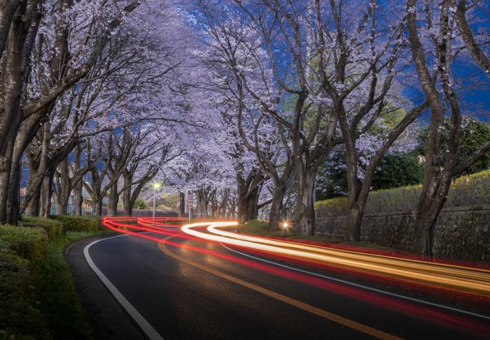 「たそがれの桜街道」 宇都宮市 青野康廣さん