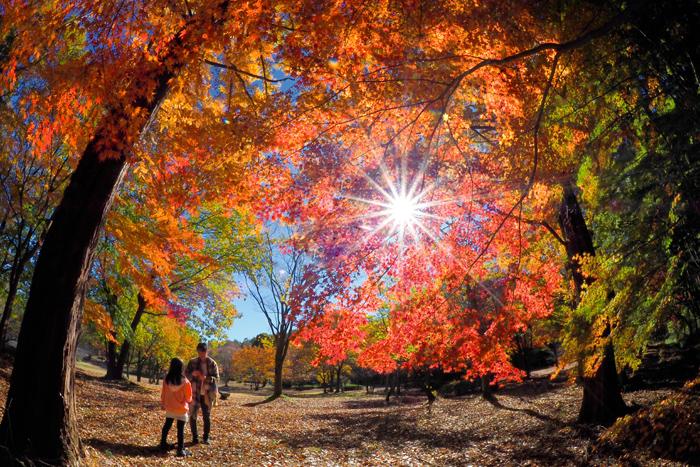 「秋色を楽しむ」 栃木市 久松茂さん